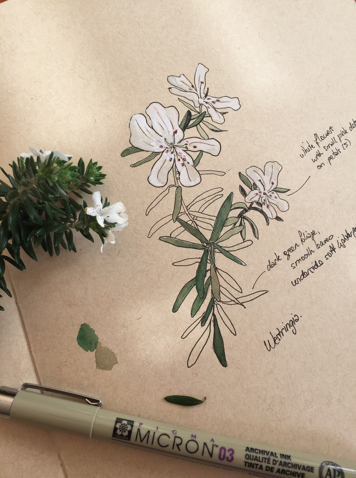 'How and Why of Nature Journaling'